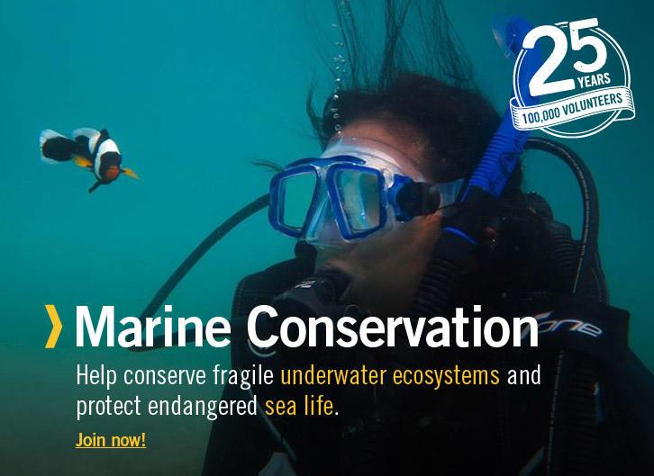 Marine Conservation Volunteering
