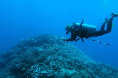 Volunteer doing research underwater in the shark conservation project in Fiji