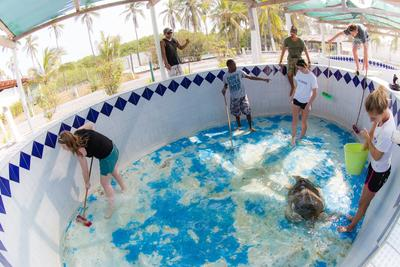 Volunteers clean a turtle and its tank at the turtle conservation centre in Cuyutlan