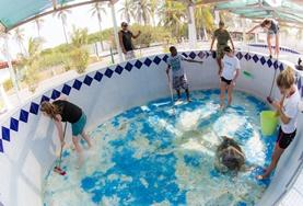 A group of Conservation volunteers cleans a turtle enclosure at a rescue and rehabilitation centre in Mexico.