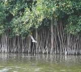 Bird Species list for Laguna Chupadero