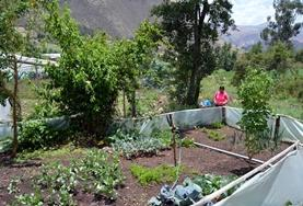 A vegetable garden planted by Nutrition volunteers in Peru to provide healthy food to local people.