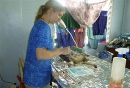 A professional vet working at a volunteer placement abroad assists during an operation on a dog.
