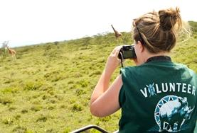 A high school student volunteering in Kenya monitors giraffe populations as part of her Conservation work in a local reserve.