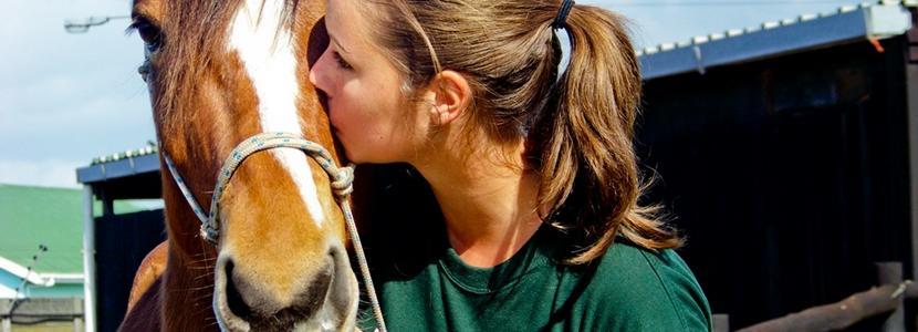 Volunteer Veterinary Medicine & Animal Care