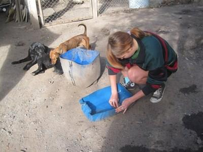 Volunteer Veterinary work experience in Argentina