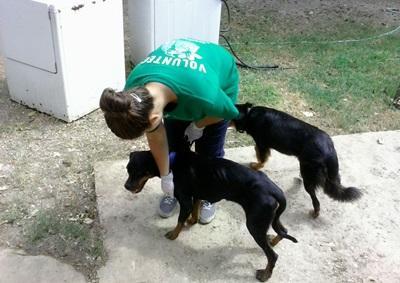 Veterinary Medicine & Animal Care